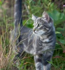 http://zvezdnajakoshka.ucoz.ru/avatar/56/402242.jpg